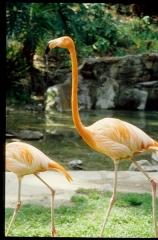 zoo0511