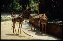 zoo0513
