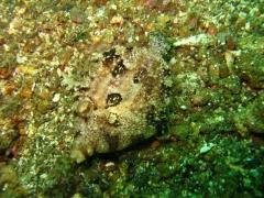 IMG_2509 filefish