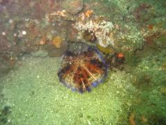 IMG_2575 Sea Urchin