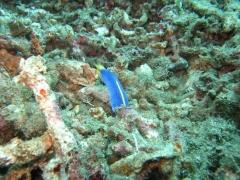 IMG_3192 Blue Ribbon Eel