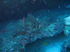 IMG_3230 puffer fish