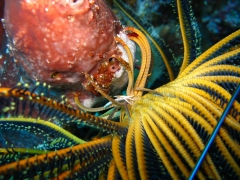 IMG_3232 squad lobster