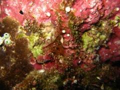 IMG_3330 Urangutan crab