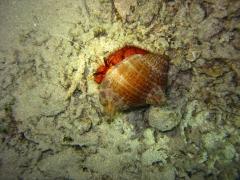 IMG_3347 Hermite crab