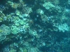 IMG_3445 pufferfish