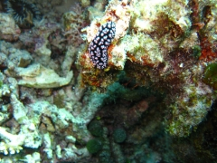 IMG_3464 nudibranch