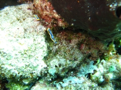 IMG_3469 nudibranch