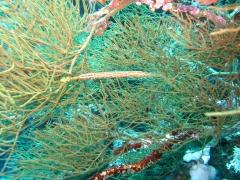 IMG_3517 nudi branch