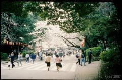japan026