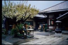 japan046